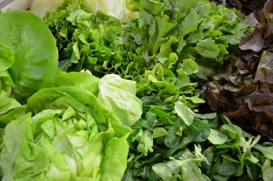 Salat - Priener Regional- und Biomarkt