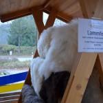 Lammfelle von unseren eigenen Schafen - Priener Regional- und Biomarkt